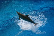 Free The Dolphin Jump Stock Photos - 13804743