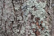Free Lichen Background Stock Photos - 13804803