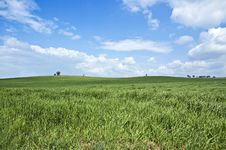 Free Green Wheat Field Stock Photography - 13804842