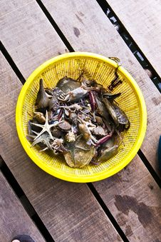 Free Crabs, Fish, Seastar, Marine Life In A Yellow Bask Stock Images - 13804854