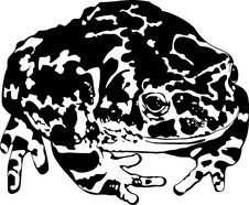 Free Toad Stock Images - 13805164