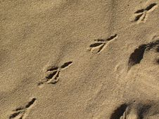 Free Seagull Footprints On The Beach Stock Images - 13806314