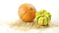 Free Pumpkins On White Background Stock Photos - 13806583