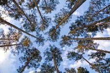 Free Trees And Sky Royalty Free Stock Photos - 13808348