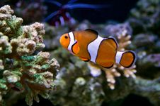 Free Finding Nemo Stock Photography - 13808492