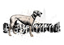 Free Greyhound On The Horizontal Poster Royalty Free Stock Photos - 13809648