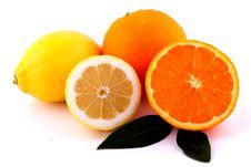 Free Oranges And Lemons Stock Photo - 13809700