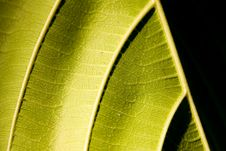 Free Giant Leaf With Shadows Stock Photography - 13809842
