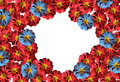 Free Primrose Flower Royalty Free Stock Photography - 13810047