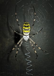 Dreadful Spider On The Dark Background. Royalty Free Stock Image