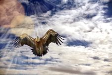 Free Flying Vulture Stock Photography - 13810072