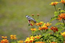 Free Colorful Butterfly Stock Photos - 13810093
