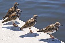 Free Four Birds Stock Image - 13810291