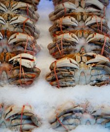 Free Fresh Crab At The Farmers Market Royalty Free Stock Images - 13810759