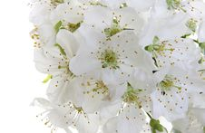 Free Spring Flower Royalty Free Stock Images - 13811889