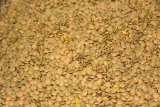 Free Heap Of Dried Brown Lentil  Close-up As Background Stock Images - 13812024