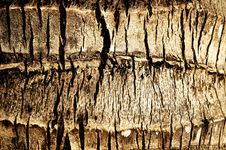 Abstract Texture An Old Dry Cracked