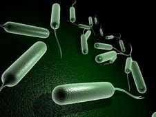 Free Coli Bacteria Royalty Free Stock Image - 13812376