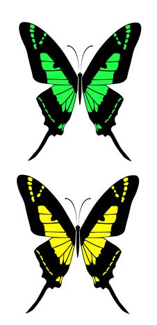 Free Butterfly Stock Image - 13812761