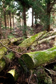 Free Fallen Trees Royalty Free Stock Photos - 13813448
