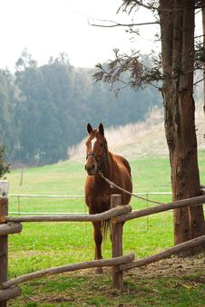 Free Horse And Field Royalty Free Stock Images - 13813589