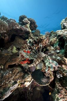 Free Lionfish And Ocean Stock Image - 13813871