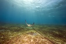 Free Eagle Ray And Ocean Stock Photo - 13814060