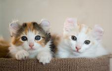 Free Kitten Stock Photo - 13814070