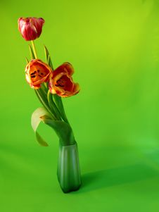 Free Bouquet Of Tulips Stock Images - 13816624