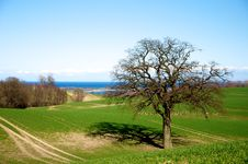 Free Green Meadow Near Baltic Sea Royalty Free Stock Photos - 13817458
