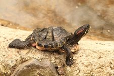 Free Cute Turtle In The Zoo Stock Photo - 13817660