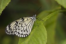 Free Paper Kite Butterfly Royalty Free Stock Photos - 13818788