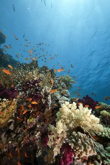 Free Ocean, Coral And Fish Royalty Free Stock Image - 13818886
