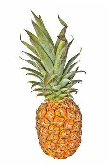 Free Pineapple Stock Photos - 13819053