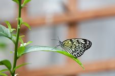 Free Butterfly On A Leaf Royalty Free Stock Photo - 13819475