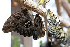 Butterflies On Branch Of Tree Stock Image