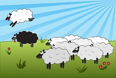 Free Jumping Over Black Sheep Stock Photos - 13819763