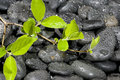 Free Green Plant Royalty Free Stock Photography - 13822967
