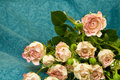 Free Pink Roses Royalty Free Stock Images - 13823089