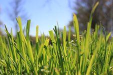Free Grass Stock Photo - 13820010