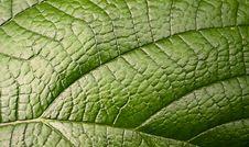 Green Leaf. Macro Stock Photos