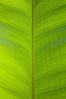 Free Green Leaf Stock Photo - 13820970