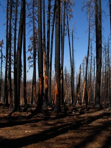 Free Forest Hill Forest Fire Royalty Free Stock Photography - 13821157