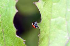 Free Ladybug On Leaf Stock Images - 13821324