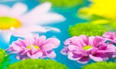 Free Flowers In Blue Water Royalty Free Stock Photos - 13822428