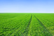 Free Green Field And Blue Sky Conceptual Image. Stock Photos - 13823013