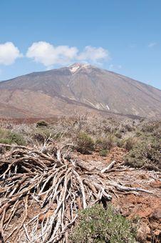 Free Volcanic Landscape - Mount Teide, Tenerife Royalty Free Stock Photography - 13823717