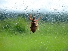 Free Bug On Glass Stock Images - 13823924