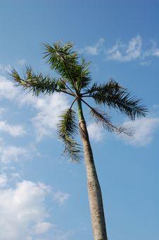 Nipa Palm Leaves Royalty Free Stock Photography