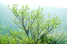 Free Green Stock Image - 13825671